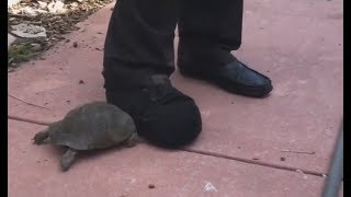 Tortoise vs. Shoe