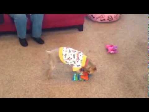 Sammy's Birthday