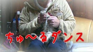 猫にちゅ~るをあげる時、ついつい口ずさんでしまう中毒性のあるCIAOち...