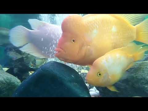 Abu dhabi mall  fish  aquarium