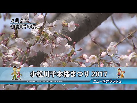 小松川千本桜まつり2017