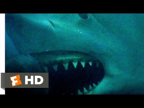 Jaws 3D 89 Movie   How Did He Get Loose? 1983 HD