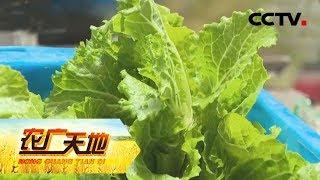 《农广天地》 20190609 香青菜糯鳜鱼肥| CCTV农业