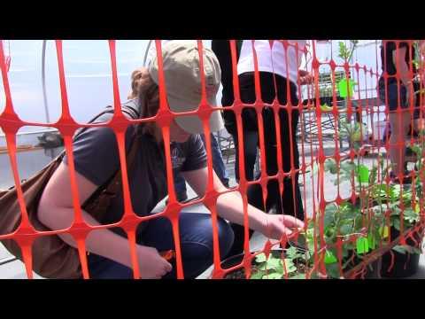 Institute of Plant Breeding, Genetics & Genomics