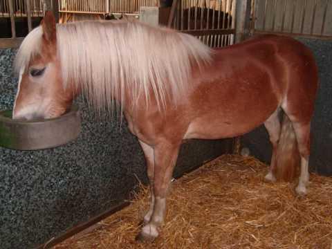 Nisar Stud Farm, Amer Nisar Khan, Horse Photos, Horse Dancing in Pakistan