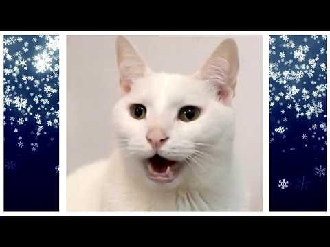 FROZEN - Let It Go - Cats Cover