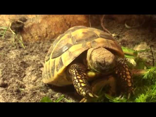 Tortoises- Whats Normal? Eating
