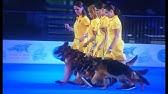 Собаки и щенки породы родезийский риджбек. Украина легко и быстро можно купить щенка родезийского риджбека. Щенки тайский риджбек.