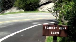 Forrest Gump Curve