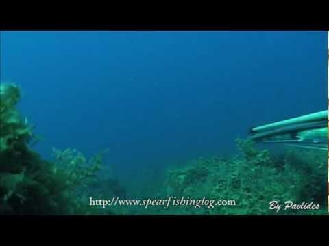 Make A Choice, Grouper, Dentex Or Bream | Spearfishing