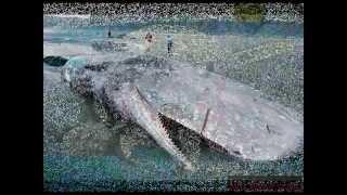 Okean canlilari ilginc
