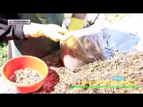 Мицелий шампиньона в Кургане. Сравнить цены, купить