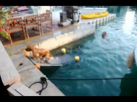 Dog Ramp Floating Youtube