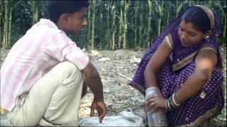 Bhindi beej upchar Purnia