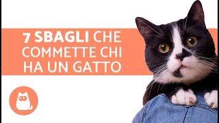Prendersi cura di un gatto – 7 SBAGLI che commette chi ha un gatto