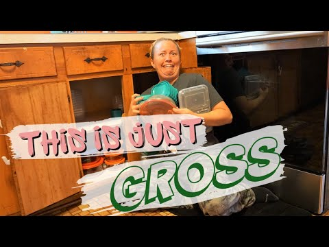 Cleaning & Organizing My Gross Kitchen Cabinets | Huge Cluttered Mess | Cleaning Motivation 2019