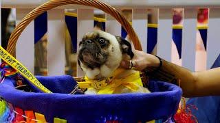 🐭 Owain yn y National Pet Show | Stwnsh Sadwrn | S4C