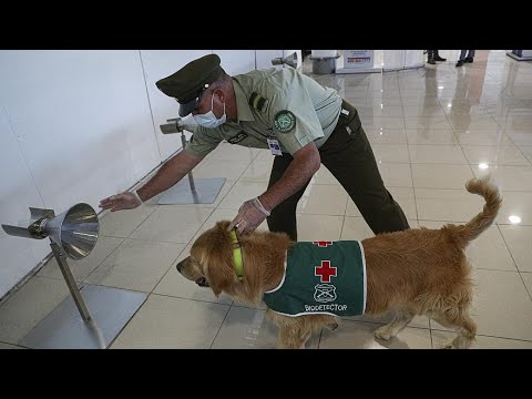 هذه الكلاب قادرة على تحديد إذا ما كنت مصاباً بكورونا