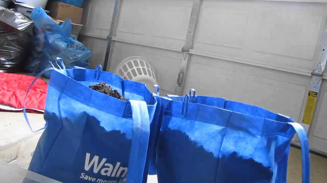 Larry Halls How To Grow Tomatoes In Walmart Bags Air Pruning