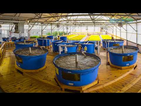 ZDEP Aquaponics from Nelson and Pade