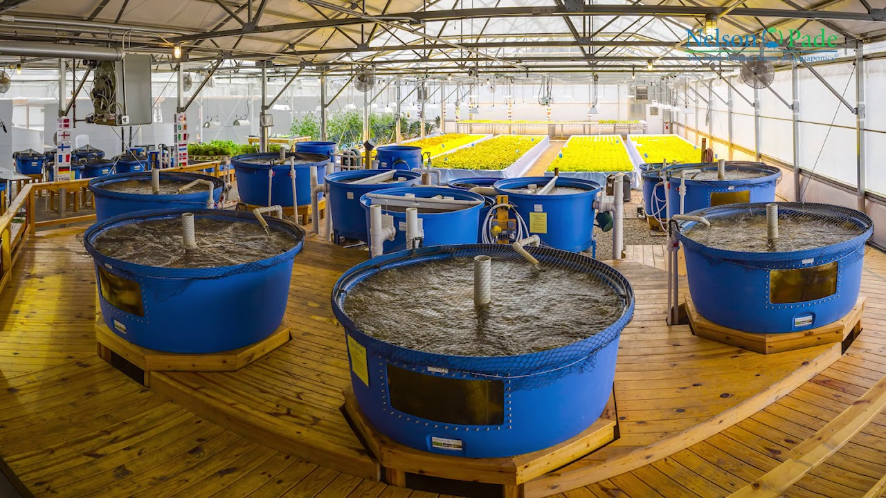 Commercial Aquaponic Systems from Nelson and Pade  Earn profits from