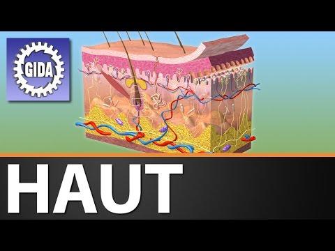 GIDA - Haut - Biologie - Schulfilm - DVD (Trailer)
