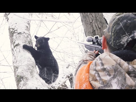 BIG Bear in the SNOW – Bear Hunting with The Untamed