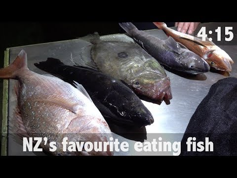 NEW ZEALAND'S FAVOURITE EATING FISH