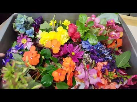 Eco Steaming Flowers with Household Iron   Demonstration with Flowers and Leaves