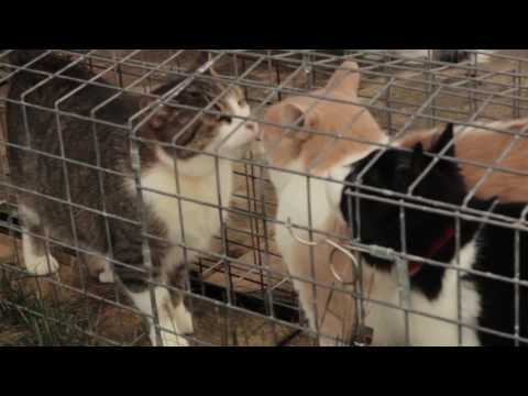 FERAL CATS OF TORONTO DOCUMENTARY