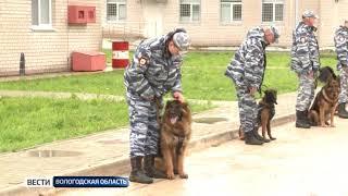 В Вологодской области объявлен конкурс рисунков «Полицейская собака»