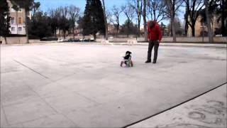 Коляски для животных Фракиштак уже в Италии / Frakishtak dog wheelchair in Italy, now.