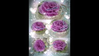 花花啫喱...Gelatin Art...Homemade Almond Milk...Natural Food Color -