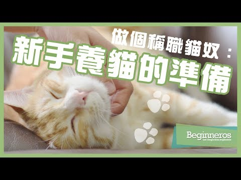 【寵物教學】做個稱職貓奴:新手養貓的準備 Beginneros