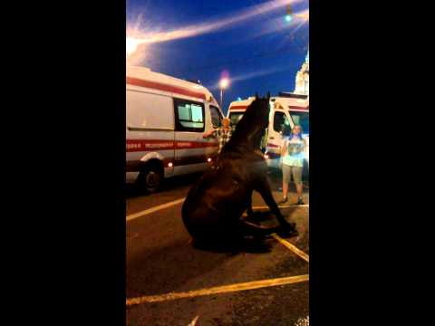 секс лошад и девки :: VideoLike