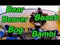 Bear - Beach - Beaver - Bog and a Bambi! - A Great Day On The Atv's