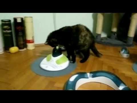 Maki enjoys catit senses massage center