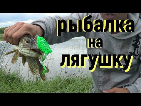 рыбалка на лягушку.