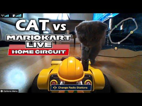 Scottish Fold Kitten VS Mario Kart Live: Home Circuit | Ravio The Scottish Fold