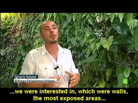 Paisajismo urbano tv interview vertical gardens and - Paisajismo urbano ...