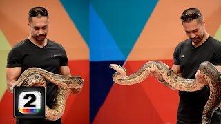 """""""เก่ง ชาติชาย"""" โชว์ งู ยักษ์ !!"""