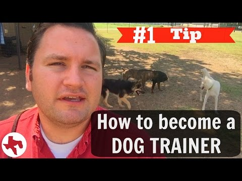 How to become a DOG TRAINER   #1 Tip Adam's advice