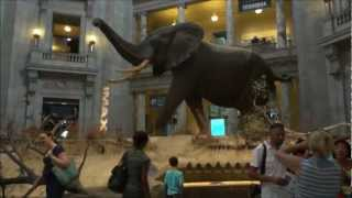 National Museum Of Natural History - USA