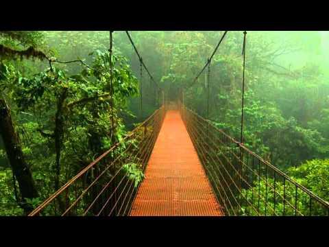 1 Hour Rain + Birds Sounds for Sacral Chakra Healing Meditation