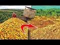 12 000 тонн выброшенных апельсинов спустя 20 лет превратили почву в...