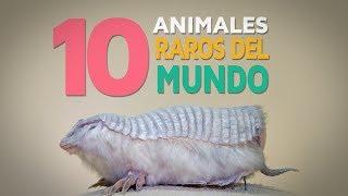 10 Animales raros del mundo | Fascinantes y curiosos 🦓