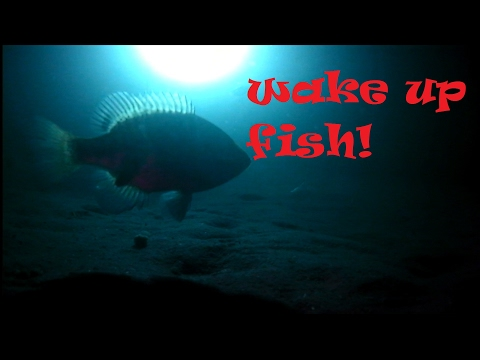 Underwater Night Footage of Fish!
