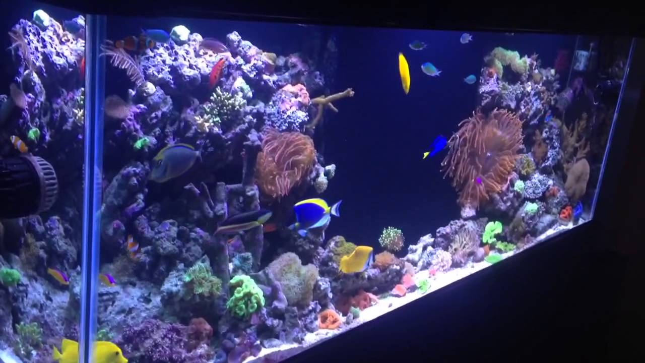 Saltwater fish tank youtube - Reef Tank Addiction Season 1 Episode 2 Ian S 150 Gallon Reef Tank Youtube
