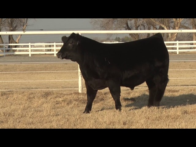 Express Ranches Lot 23