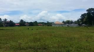 Horse at Juanito's Farm @Cagbang Oton Iloilo